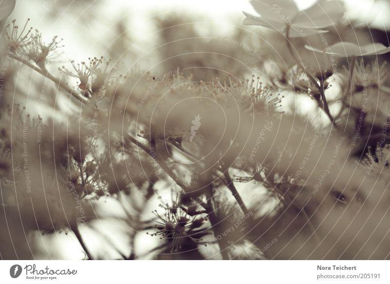 mittendrin Natur schön Himmel weiß Baum Pflanze Sommer Blüte Frühling Stimmung Umwelt ästhetisch Wachstum Sträucher Blühend Schwache Tiefenschärfe