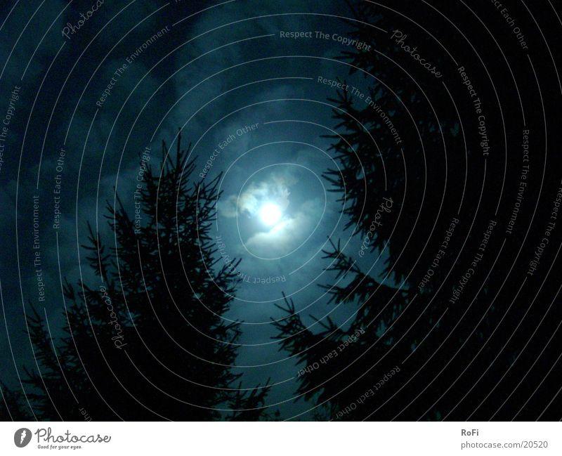 Mondlicht in Blau Nacht Wolken Mondschein Baum Herbst mystisch unheimlich Himmel blau Schatten