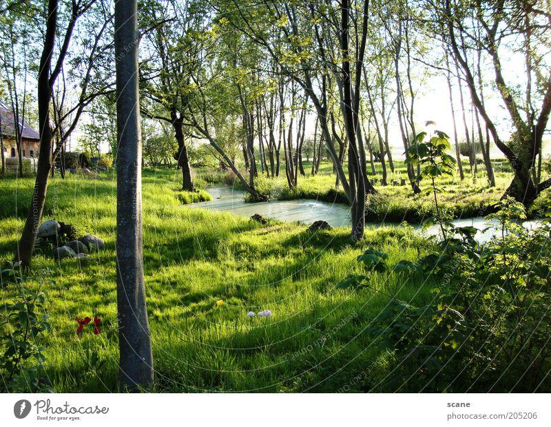 Oase auf Rügen Umwelt Natur Pflanze Himmel Sonnenlicht Sommer Schönes Wetter Baum Gras Sträucher Moor Sumpf Bach Stein außergewöhnlich braun gelb grün Idylle