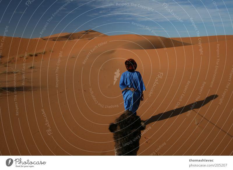 Sahara-Wüste in Marokko maskulin 1 Mensch Umwelt Natur Landschaft Sand Himmel Schönes Wetter Wärme Dürre Tier Nutztier Kamel Ferien & Urlaub & Reisen Ausflug