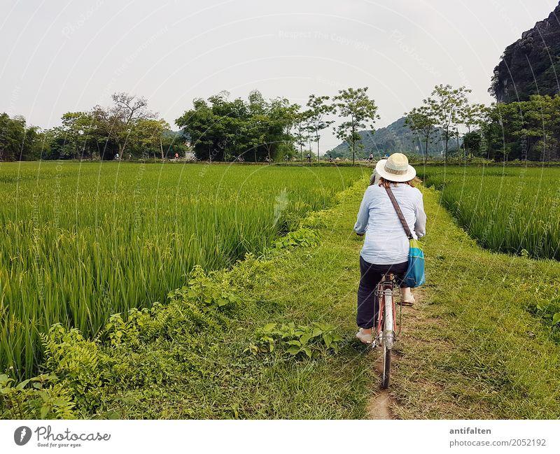 Schöne Fahrradstrecke Ferien & Urlaub & Reisen Tourismus Ausflug Abenteuer Ferne Freiheit Reisfeld Fahrradfahren feminin Frau Erwachsene Körper Rücken Beine Fuß