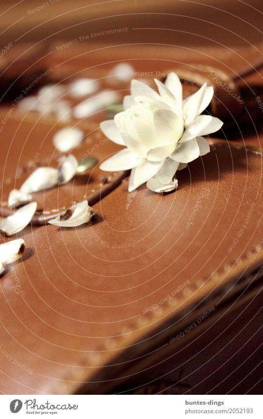 Blüte elegant schön Wellness Leben harmonisch Wohlgefühl Zufriedenheit Sinnesorgane Erholung ruhig Meditation Duft Natur Pflanze Frühling Sommer Blatt fest