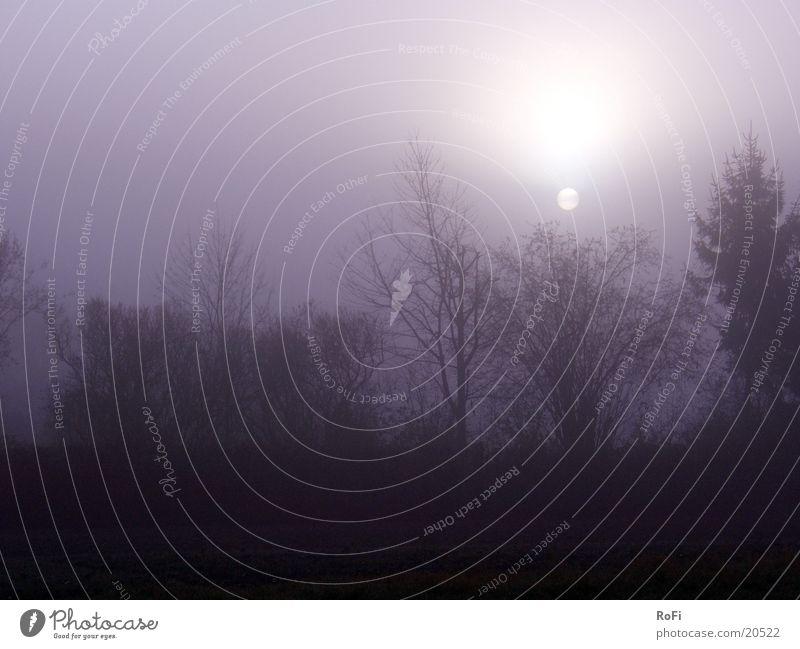Ein Herbstmorgen im Nebel Baum Sonne Herbst Nebel Wetter violett schlechtes Wetter