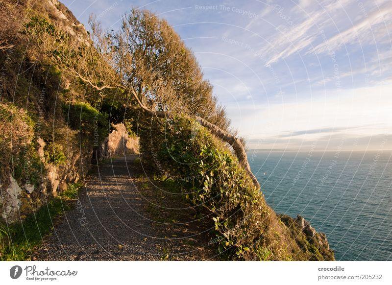 New Zealand 150 Natur Meer Pflanze Gras Wege & Pfade Sand Landschaft Küste Wind Umwelt Felsen Insel Sträucher Sturm Hügel Urwald