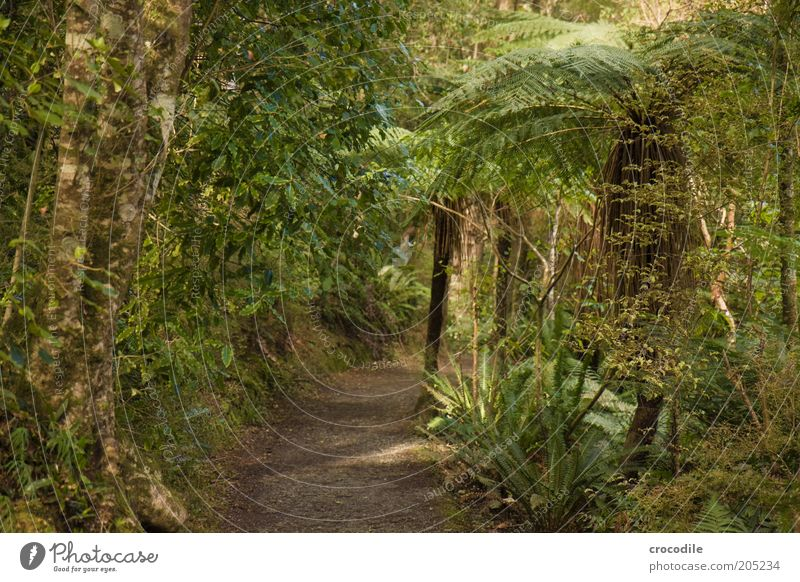 New Zealand 151 Natur Wasser Baum Pflanze Wege & Pfade Umwelt ästhetisch außergewöhnlich Urwald Farn Neuseeland Echte Farne Wald Wildpflanze