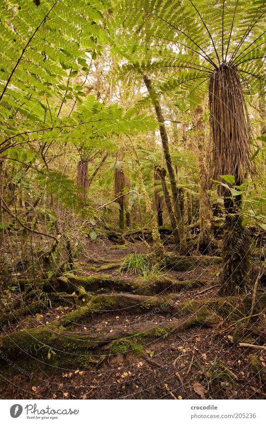 New Zealand 153 Natur Wasser Baum Pflanze Wege & Pfade Umwelt ästhetisch Romantik außergewöhnlich Urwald Moos Farn Neuseeland Echte Farne Perspektive Weitwinkel