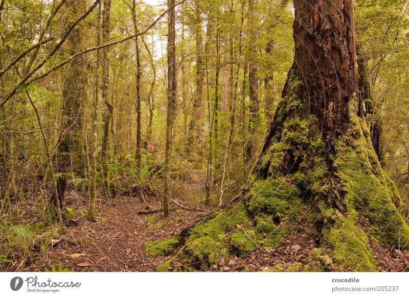 New Zealand 154 Umwelt Natur Wasser Pflanze Baum Moos Wildpflanze Urwald ästhetisch außergewöhnlich Romantik Farbfoto Gedeckte Farben Außenaufnahme Menschenleer