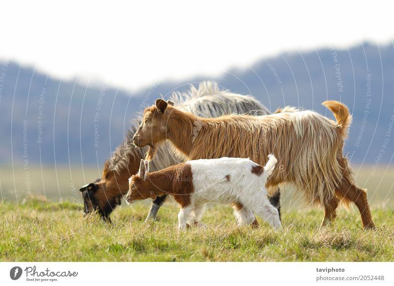 Kind Natur Landschaft Tier Erwachsene Umwelt Liebe Wiese lustig natürlich Familie & Verwandtschaft klein Glück Menschengruppe Baby niedlich