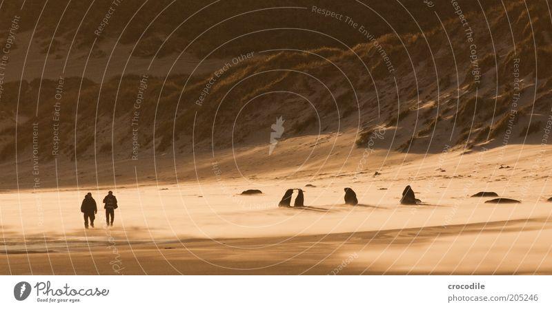 New Zealand 160 Lifestyle Ausflug Abenteuer Mensch 2 Umwelt Natur Landschaft Urelemente Sand Wind Küste Strand Bucht Meer Insel Neuseeland Tier Wildtier Seelöwe