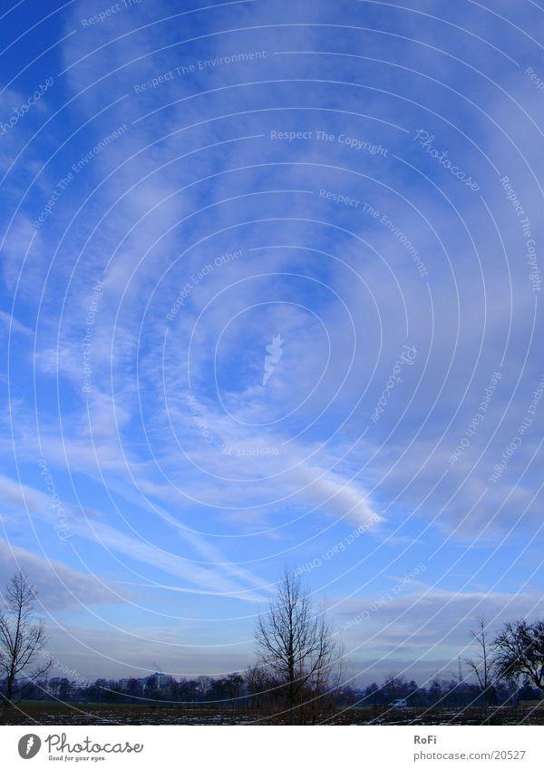 Wolkentanz Himmel Baum blau Winter Schönes Wetter Zweig Februar