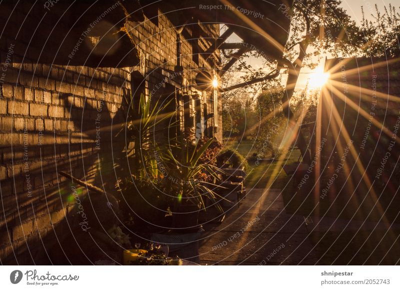 Sonnenuntergang im Spreewald Natur Ferien & Urlaub & Reisen Pflanze schön Landschaft Erholung Haus ruhig Wand Umwelt Mauer Tourismus Freiheit Häusliches Leben
