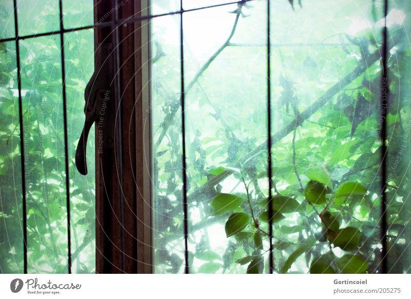 Durchwachsen Umwelt Natur Pflanze Baum Sträucher Blatt Grünpflanze alt grün verfallen Verfall Fenster Gitter Blattgrün Farbfoto Licht Schatten Sonnenlicht