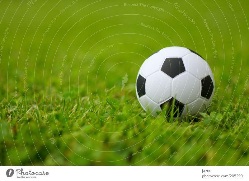 fußball Freizeit & Hobby Sport Ball Farbfoto Außenaufnahme Nahaufnahme Menschenleer Tag Starke Tiefenschärfe Froschperspektive Sportrasen Fußball 1 Kugel