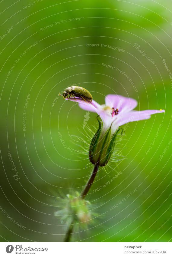 Soll ich bleiben oder sollte ich jetzt gehen Natur Tier Frühling Blume Blüte Wald springen stehen warten hoch grün rosa Euphorie Tapferkeit Abenteuer Bewegung