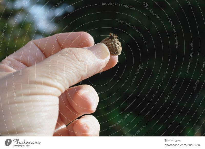 Doppeldeutigkeiten   Fingerhut. Natur Pflanze Hand einfach berühren festhalten