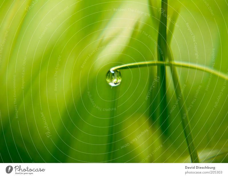 Morgens in der Wiese Leben harmonisch Natur Pflanze Wassertropfen Frühling Sommer Gras Grünpflanze grün Kugel Tau feucht nass glänzend Reflexion & Spiegelung