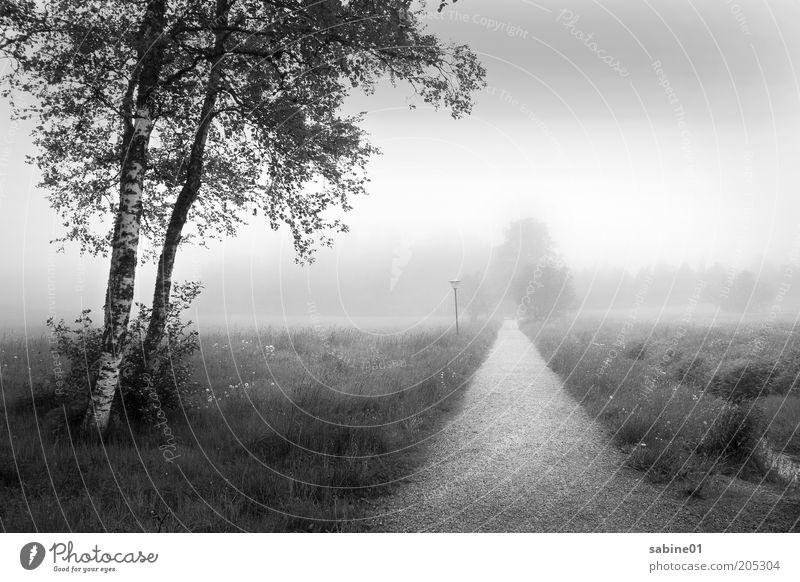 Nebellandschaft Umwelt Natur Landschaft Luft Wolken Sommer Herbst Klima Wetter schlechtes Wetter Regen Pflanze Baum Gras Sträucher Wiese Feld Stadtrand