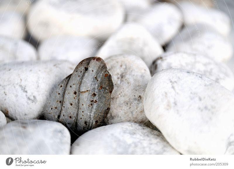Einstein Natur Stein Makroaufnahme Kieselsteine steinig Detailaufnahme