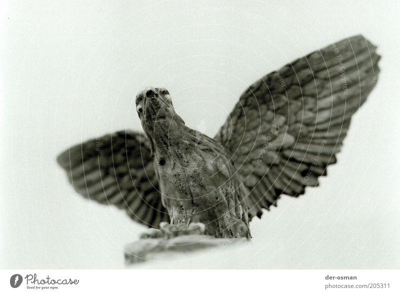 Adler weiß Tier grau Stein Kraft Vogel Tiergesicht Flügel Dekoration & Verzierung Mut stark Bundesadler Skulptur Stolz erhaben
