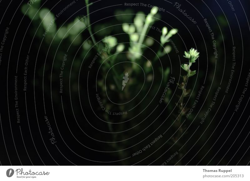 Pfanzen im Dunkel der Nacht I Natur grün Pflanze Blatt schwarz dunkel Umwelt Sträucher Grünpflanze