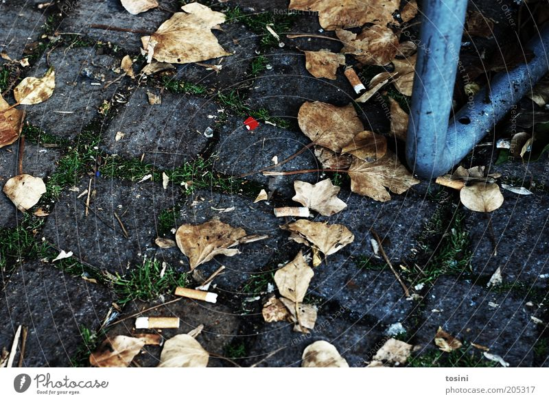 red dot Blatt Herbst Stein Boden Müll Zigarette Tabakwaren Pflastersteine Fuge Herbstlaub wegwerfen achtlos bodenständig Rauchpause Zigarettenstummel