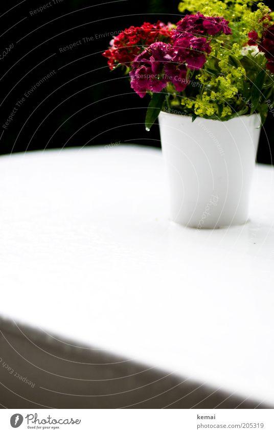 Blumenstrauß im Regen Umwelt Natur Pflanze Frühling Klima Wetter schlechtes Wetter Blüte Grünpflanze Topfpflanze Tisch Gartentisch nass mehrfarbig weiß Tropfen