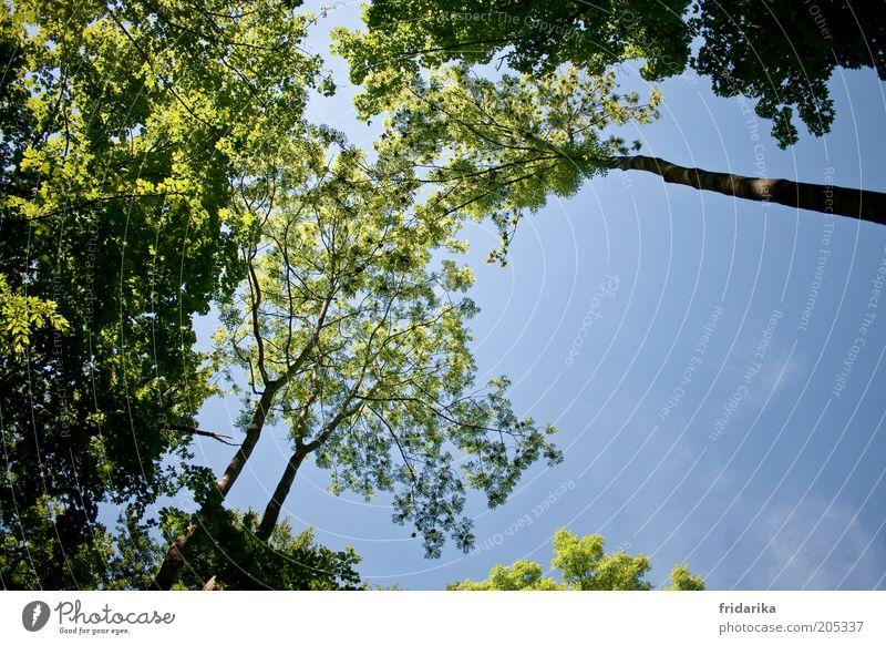 im mischwald Himmel Natur blau grün Baum Pflanze Wald Ferne Umwelt Landschaft Frühling Luft braun groß frei ästhetisch