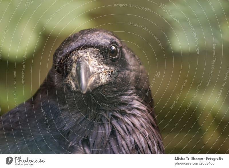 Im Blick Natur grün Sonne Tier dunkel schwarz Umwelt gelb Auge natürlich Vogel fliegen Wetter glänzend Wildtier Feder