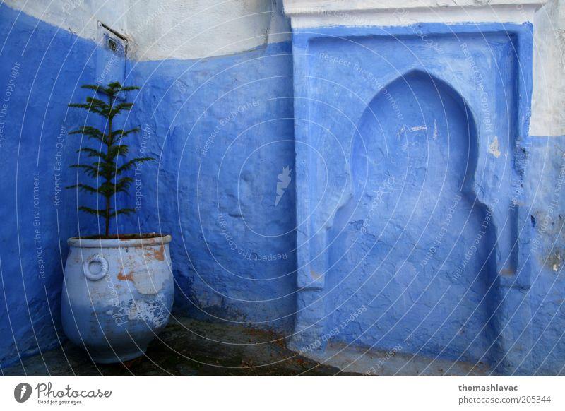 blau Baum Pflanze Haus Wand Mauer Fassade Afrika Dorf Blumentopf Altstadt Grünpflanze Kleinstadt Marokko Chechaouen