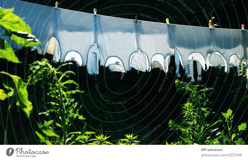 Waschtag Häusliches Leben Garten Bekleidung Unterwäsche Stoff Unterhemd nass grün weiß Wäsche Wäsche waschen trocknen aufhängen Wäscheleine Wäscheklammern