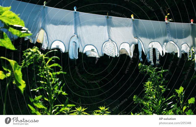 Waschtag weiß grün Garten nass Bekleidung frisch Häusliches Leben Stoff feucht Unterwäsche Wäsche waschen trocknen aufhängen Wäscheleine