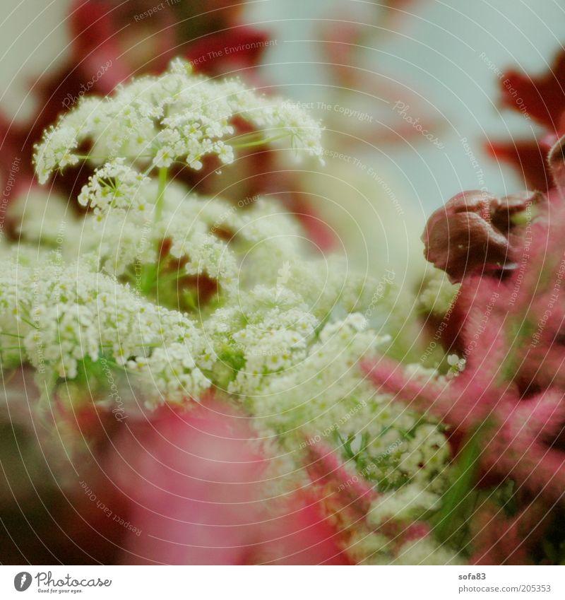 beiwerk schön weiß Blume Pflanze Blüte Frühling ästhetisch nah Duft Makroaufnahme Wildpflanze