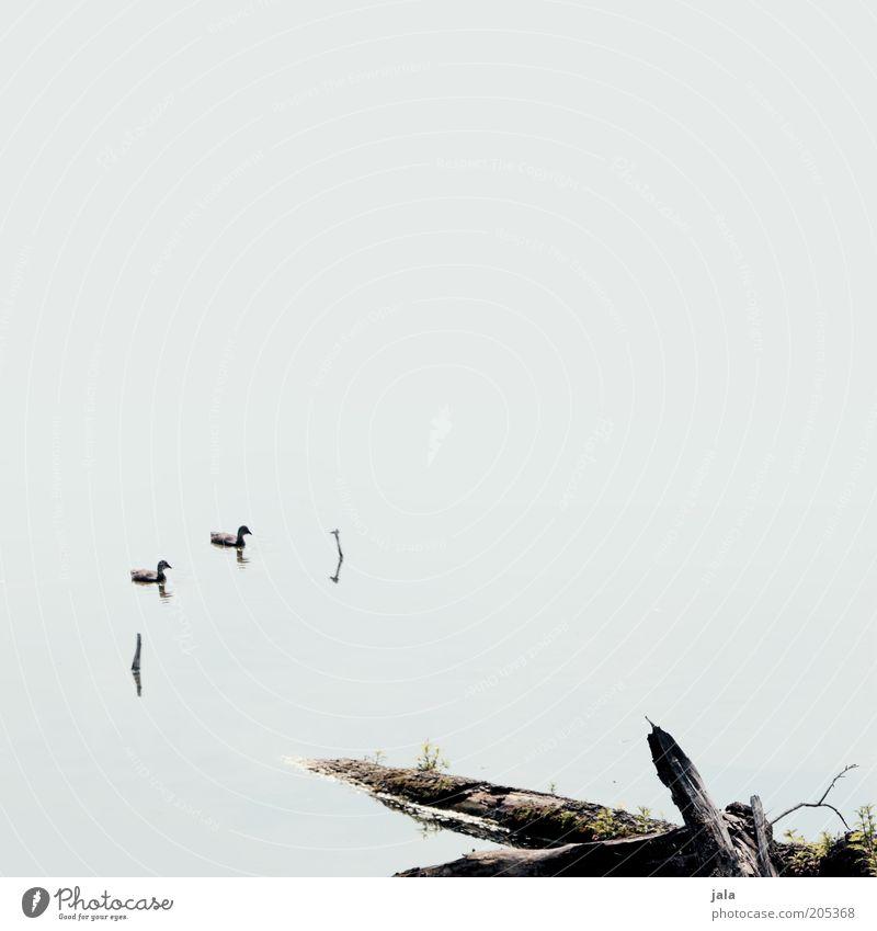 silence Wasser Baumstamm Teich See Tier Ente 2 Tierjunges klein natürlich ruhig Stil Stimmung Farbfoto Gedeckte Farben Außenaufnahme Menschenleer