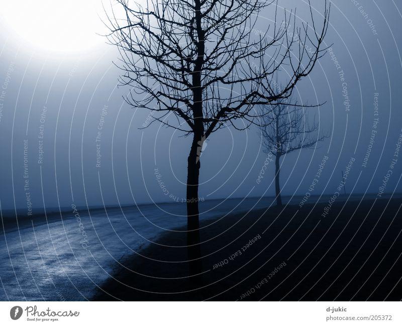 Bäume und Strasse im Nebel ruhig Winter Natur Landschaft Luft Sonnenlicht Herbst Wetter schlechtes Wetter Baum Verkehrswege Straße dunkel kalt blau schwarz