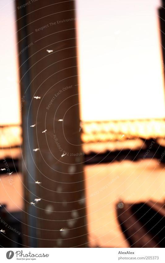 Blutsaugerparty Brücke Stahlträger Verkehrswege Tier Stechmücke Rost fliegen braun abstrakt Tag Farbfoto Außenaufnahme Dämmerung Blitzlichtaufnahme