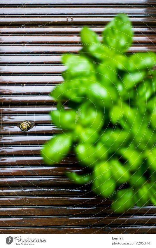 Auf dem Weg zum Grün Umwelt Natur Pflanze Tier Frühling Klima Blatt Grünpflanze Nutzpflanze Basilikum Basilikumblatt Terrasse Holzfußboden Wildtier Schnecke