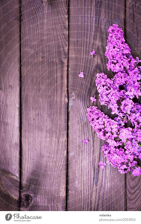 Lila Flieder Zweig Ostern Pflanze Blatt Blüte Blumenstrauß Holz Feste & Feiern frisch natürlich braun violett Farbe Überstrahlung Blütenknospen geblümt Frühling