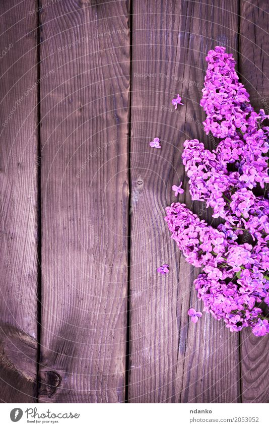 Pflanze Farbe Blatt Blüte natürlich Holz Feste & Feiern braun frisch Ostern violett Jahreszeiten Blumenstrauß Beautyfotografie Blütenknospen Botanik