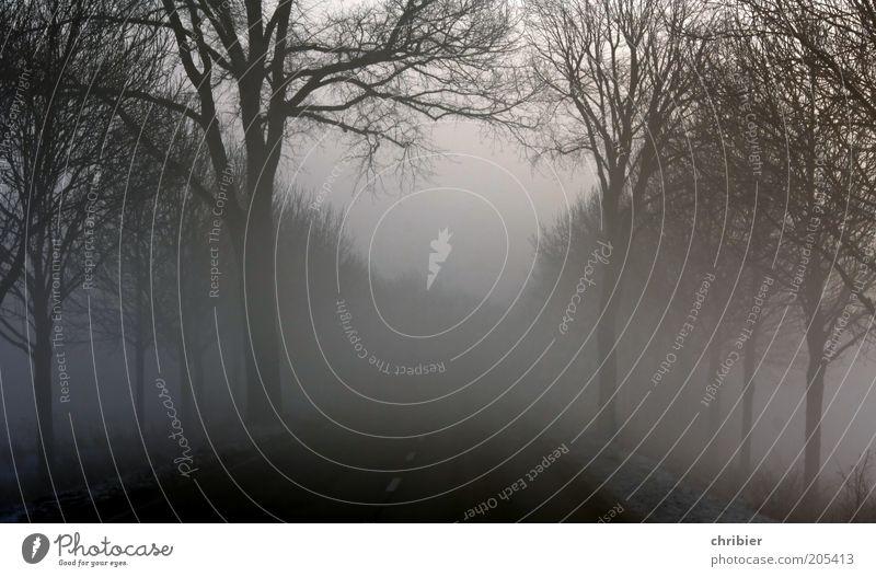 Reise ins Nirgendwo Baum schwarz Straße dunkel Landschaft grau Wege & Pfade Nebel gefährlich trist Asphalt Verkehrswege Allee schlechtes Wetter kahl Dunst
