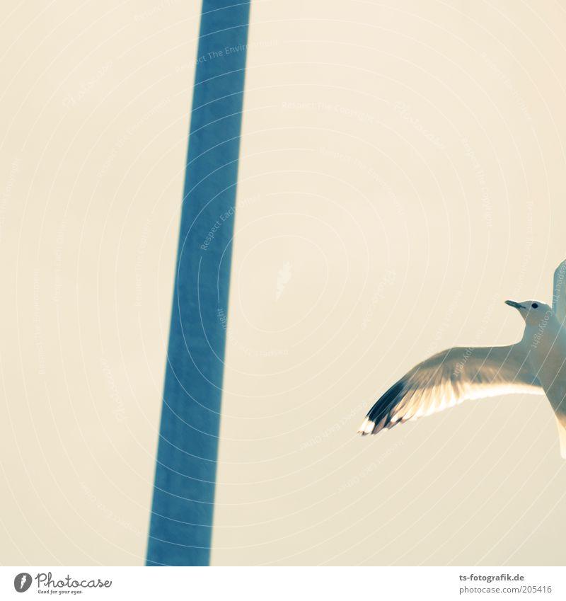 Brille vergessen? Natur weiß blau Tier Freiheit Luft Linie hell Vogel Metall fliegen frei Flügel Möwe Pfosten fliegend