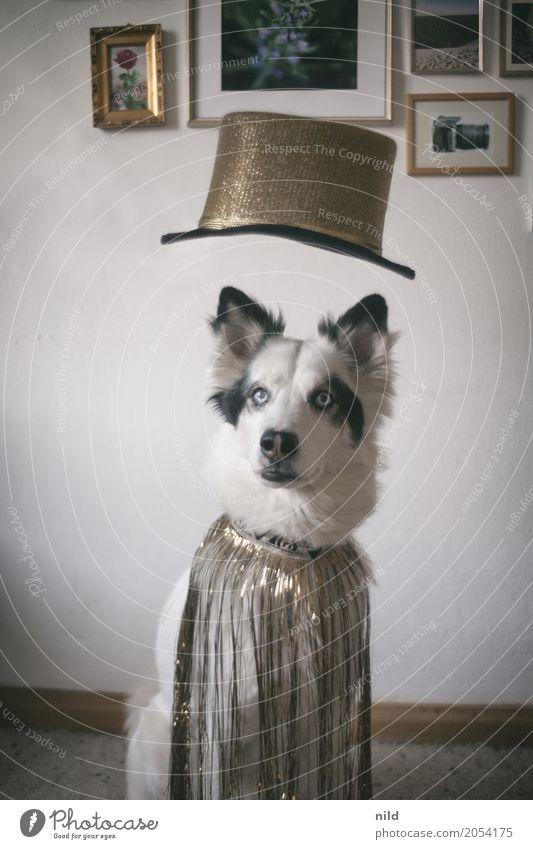 say what? Mode Bekleidung Fell Accessoire Hut Tier Haustier Hund Tiergesicht 1 außergewöhnlich elegant Freundlichkeit trendy schön lustig niedlich trashig