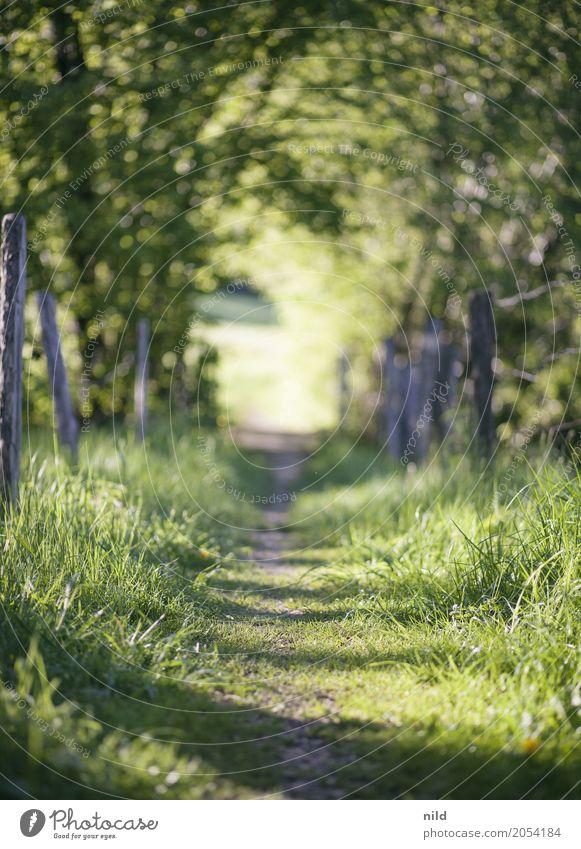 Sommerpfad Umwelt Natur Landschaft Schönes Wetter Pflanze Baum Wiese Feld Wege & Pfade entdecken Erholung wandern grün ruhig Farbfoto Außenaufnahme Menschenleer