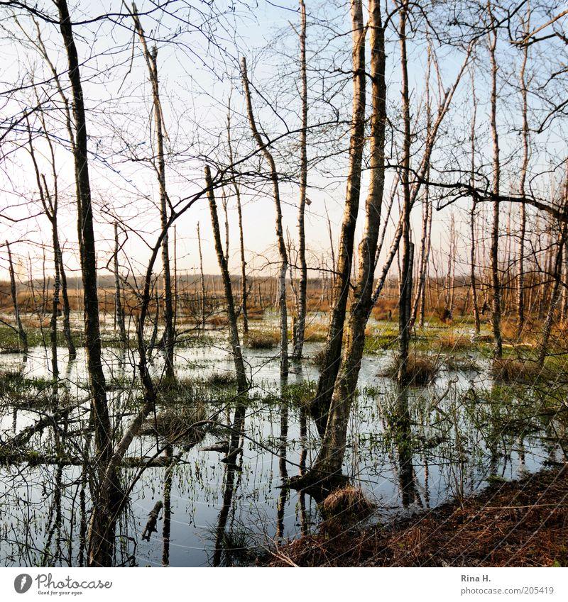 Himmelmoor II Natur alt Wasser Baum Pflanze Umwelt Leben Landschaft Erde nass natürlich Klima Urelemente Schönes Wetter Vergangenheit feucht
