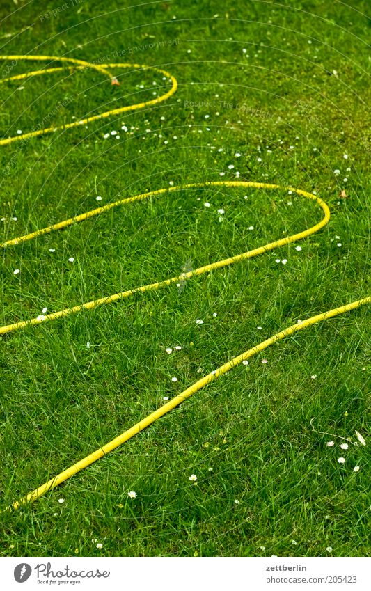 Die Schlange schläft. Wasser Sommer gelb Wiese Gras Garten frisch Rasen Freizeit & Hobby Sportrasen Kurve Erfrischung gießen Schlauch Arbeit & Erwerbstätigkeit