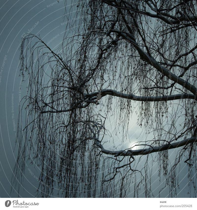 Ausschnitt Himmel Natur Baum Sonne Einsamkeit ruhig Winter Landschaft Umwelt dunkel kalt Tod grau Traurigkeit Stimmung Wachstum