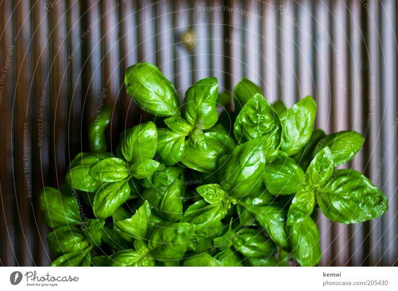 Auf dem Weg zum Grün II Umwelt Natur Pflanze Tier Frühling Klima schlechtes Wetter Regen Blatt Grünpflanze Nutzpflanze Topfpflanze Basilikum Basilikumblatt 1