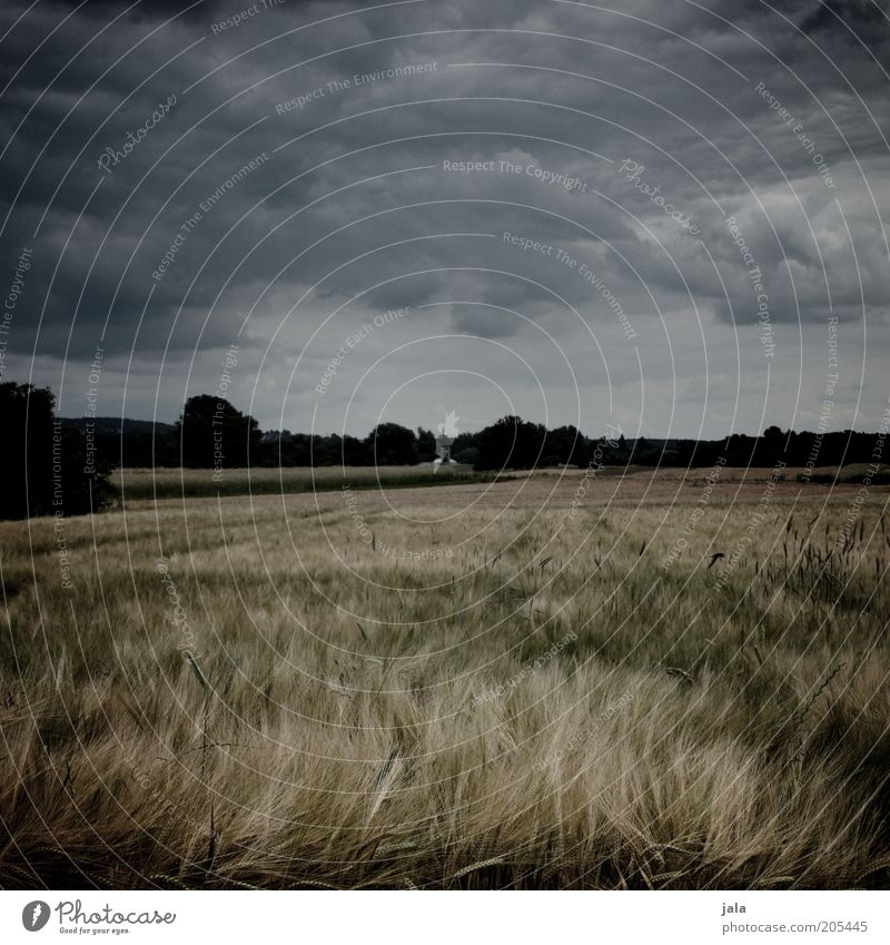 hejo, spann den wagen an... Natur Himmel Sommer dunkel Landschaft Feld Wind bedrohlich Klima Sturm Gewitter Kornfeld Gewitterwolken Nutzpflanze