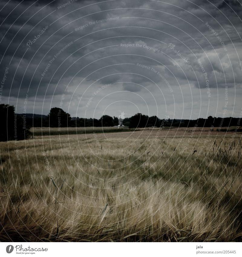 hejo, spann den wagen an... Natur Landschaft Himmel Gewitterwolken Sommer Klima Wind Sturm Nutzpflanze Feld dunkel Farbfoto Außenaufnahme Menschenleer Tag