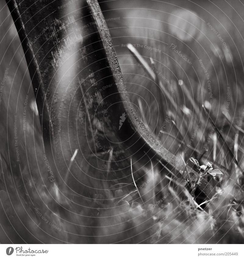 Fuß Umwelt Natur Pflanze Gras Grünpflanze alt Metall Rost schwarz Schwarzweißfoto Außenaufnahme Tag Schwache Tiefenschärfe Nahaufnahme Detailaufnahme standhaft