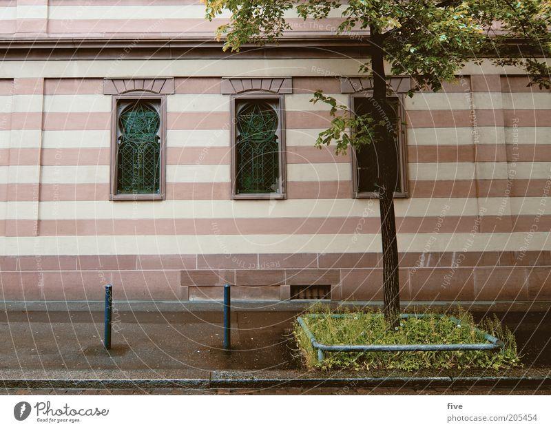 streifen Pflanze Baum Gras Stadt Haus Fassade Fenster Streifen Bordsteinkante Farbfoto Außenaufnahme Menschenleer Tag Licht Weitwinkel gestreift Bürgersteig